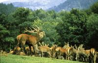 Wild- und Wanderpark